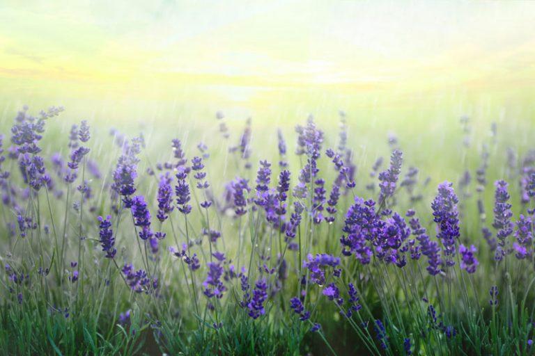 naturheilpraxis-haag-heidelberg-blumen